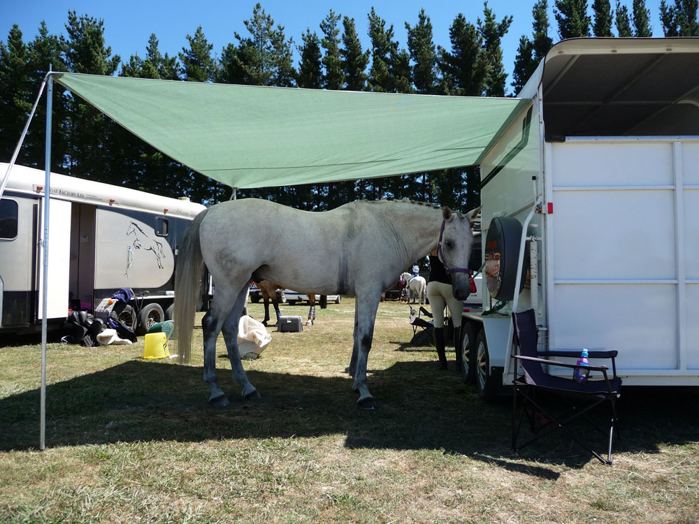Keeping the horse shaded under the cover of a shade sail style awning, custom-made by the sail makers at Douglas Innovation, Hawke's Bay NZ